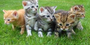 chatons-pri