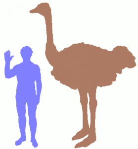 ostrich-and-human