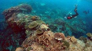 lagon-coraux
