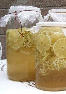 fermentation-r3